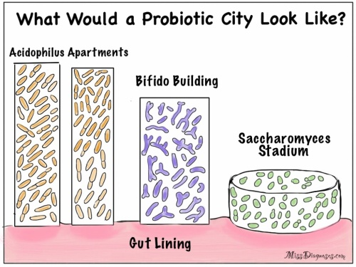 What a probioitc city might look like: acidophilus apartments, bifido building, saccharomyces stadium