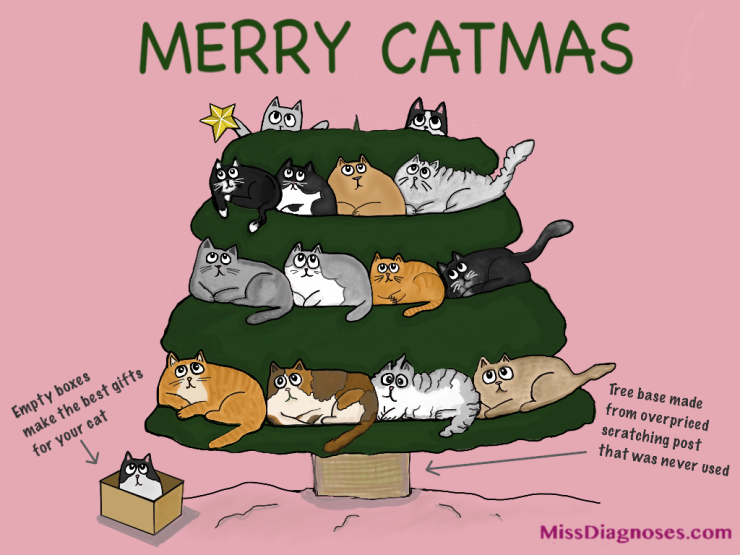 empty boxes make great Catmas gifts
