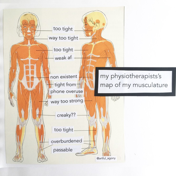 Physiotherapist map of musculature